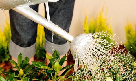 onderhouden tuin